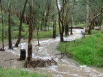 Ippinitchie Creek flowing through Taralee