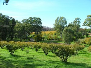 Autumn view from Ruby Cottage veranda, looking east