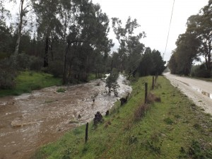 Ippinitchie Creek alongside Forest Road