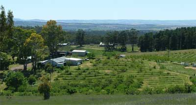 Looking north east over Taralee Orchards